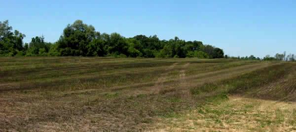 black hayfield