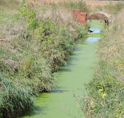 rice lake drain