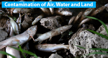 Contamination of Air, water and land around CAFOs