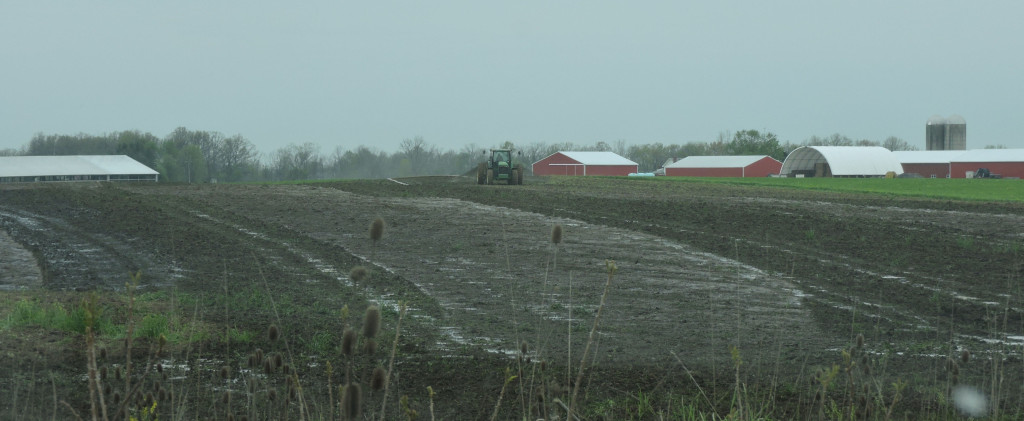 Manure ponding in a field from a dragline application directly from a lagoon Hartland application 5/9/16