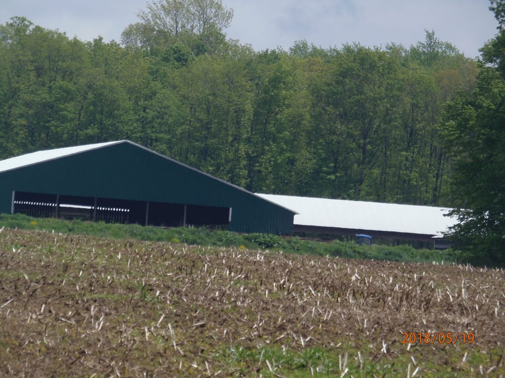 May 29, 2018 – Terrehaven back barns. Are those manure piles outside of the containment bunkers? (We have winter pictures of brown piles here.) Is that green vegetation growing on those piles? We hope this is simply a mirage, or some approved containment structure, and not a permit violation.