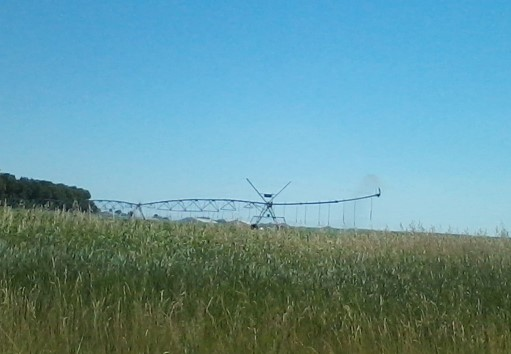Irrigating Corn from CAFO Lagoon Hudson Dairy