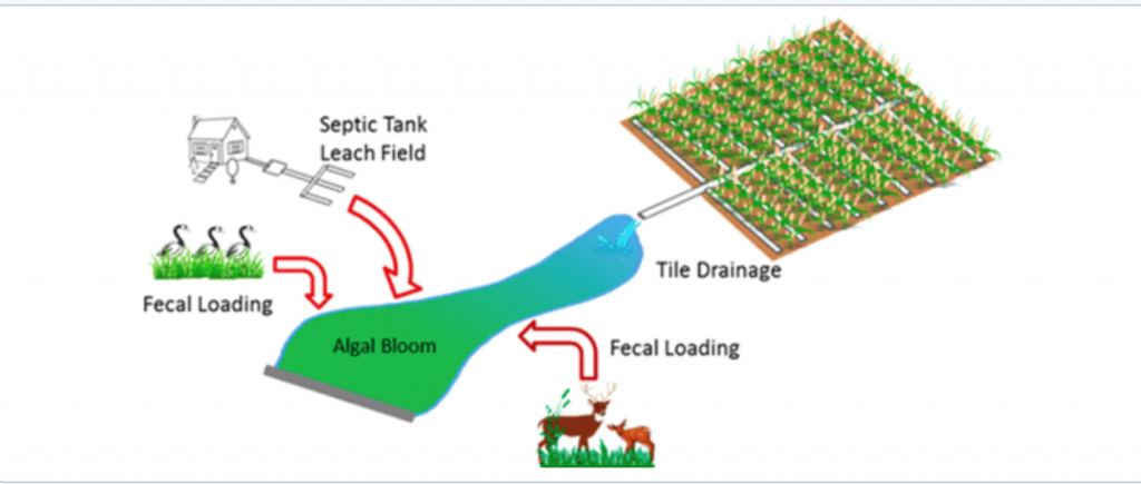 Tile Drainage and Anthropogenic Land Use Contribute to Harmful Algal Blooms and Microbiota Shifts in Inland Water Bodies  - diagram of fecal loading impact