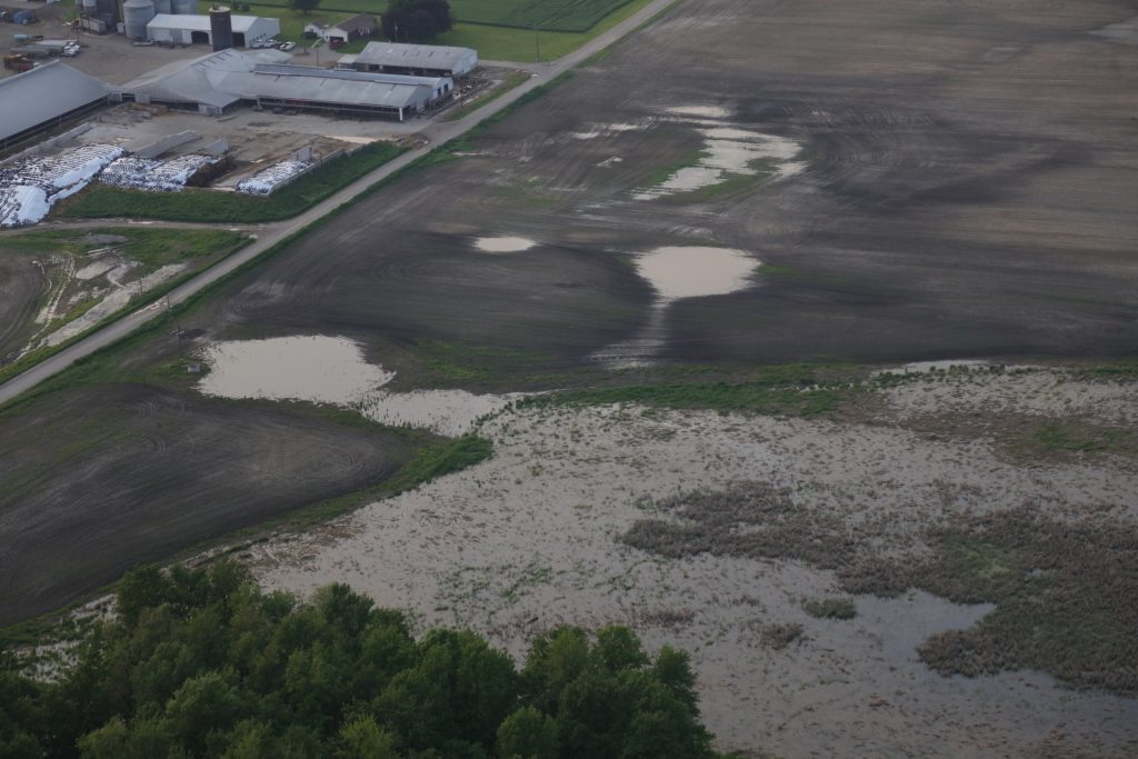 Warner runoff south from silage piles, ponding around structure